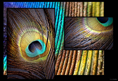 Photograph - Iridescent Beauty by Lauren Radke