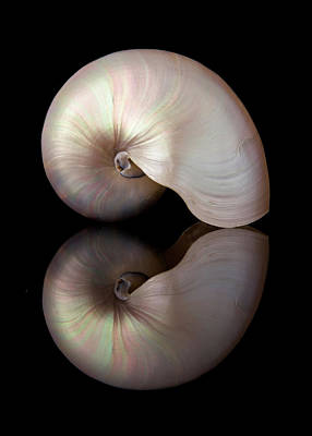 Iridescent Photograph - Iridescent Nautilus Shell by Jim Hughes
