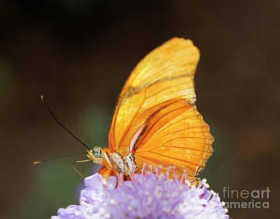 Photograph - Iridescent Orange Glow by Ruth Jolly