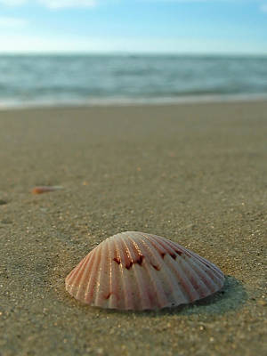 Photograph - Iridescent Seashell by Juergen Roth