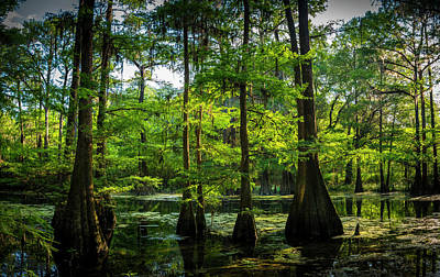 Wetlands Photograph - Iridium Paradise by Marvin Spates