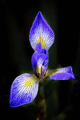 Photograph - Iris #1 by David Heilman
