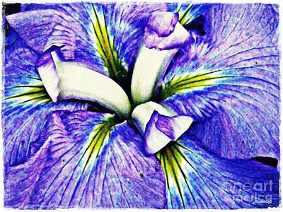 Photograph - Iris 12 by Sarah Loft