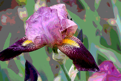 Photograph - Iris 21 by Allen Beatty