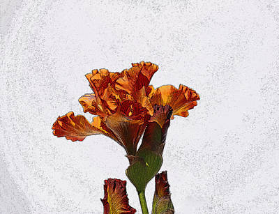 Photograph - Iris 36 by Allen Beatty