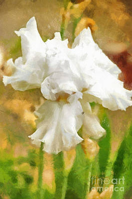 Photograph - Iris 42 by Paulette B Wright