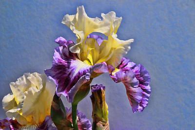 Photograph - Iris 36 by Allen Beatty