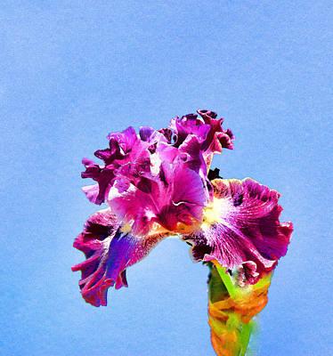 Photograph - Iris 37 by Allen Beatty