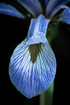 Photograph - Iris #5 by David Heilman