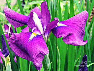Photograph - Iris 5 by Sarah Loft