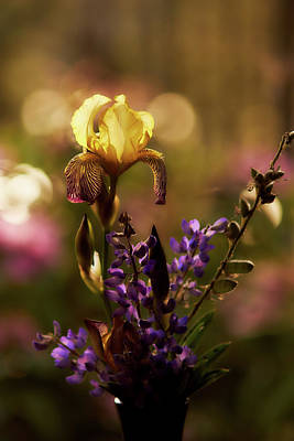 Photograph - Iris 6 by Loni Collins