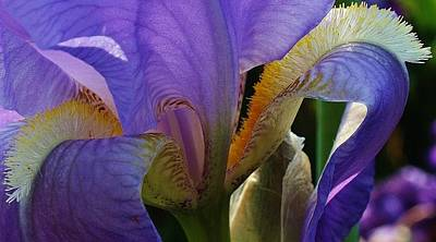 Photograph - Iris Abstract 1 by Bruce Bley