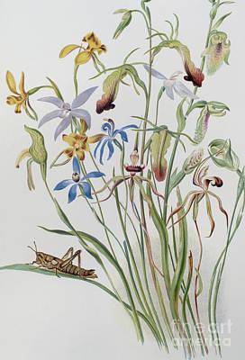 Caroline Wall Art - Painting - Iris And Blue Speedwell by Caroline Louisa Meredith