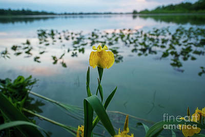 Photograph - Iris And Water by David Arment