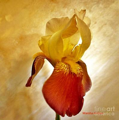 Photograph - Iris Angel by Marsha Heiken