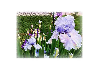 Photograph - Iris At Fence by Larry Bishop