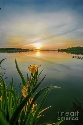 Photograph - Iris At Sundown by David Arment
