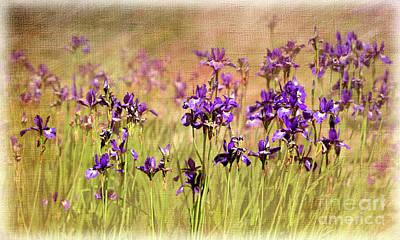 Digital Art - Iris Beauty by Liz Alderdice