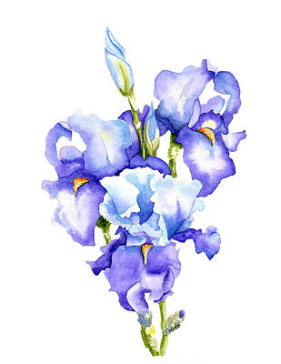 Painting - Iris Blooms by Brett Winn