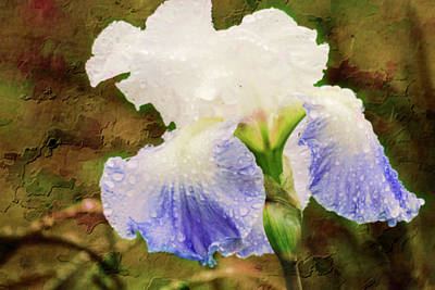 Digital Art - iris Blossom in the rain. by Rusty R Smith