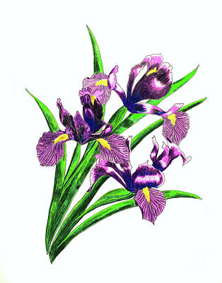 Lilac Drawing - Iris Bouquet by Laura Wilson