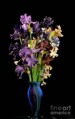 Photograph - Iris Bouquet by Louise Magno