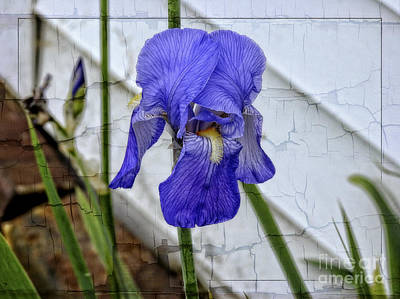 Photograph - Iris by Brenda Bostic