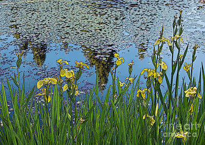 Photograph - Iris By The Pond - Artistic Version by Maria Janicki