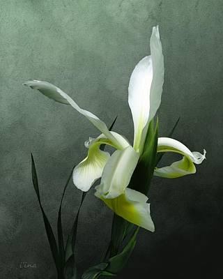 Photograph - Iris Celebration by I\'ina Van Lawick