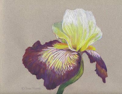 Drawing - Iris by Elaine Pawski