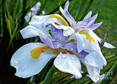 Iris Enjoying The Sunshine Art Print by Kaye Menner