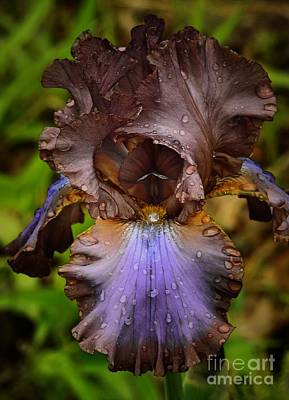 Photograph - Iris  by Eunice Miller