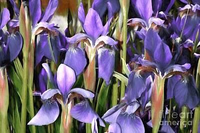 Photograph - Iris Fantasy by Benanne Stiens