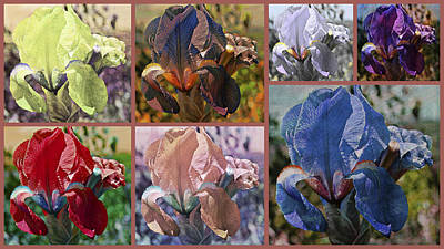 Photograph - Iris Fantasy by Dorothy Berry-Lound