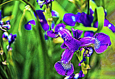 Abstract Utensils - Iris fantasy by Margo Cat Photos