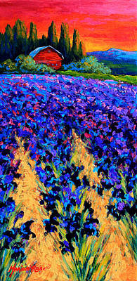 Flower Fields Painting - Iris Farm by Marion Rose