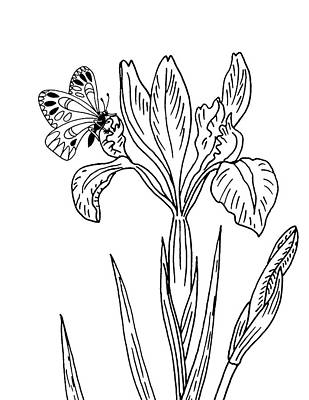 Florals Drawings - Iris Flower And Butterfly Drawing by Irina Sztukowski