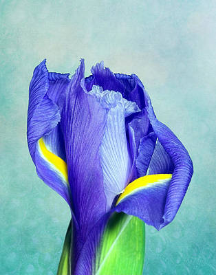 Textures Photograph - Iris Flower Of Faith And Hope by Tom Mc Nemar
