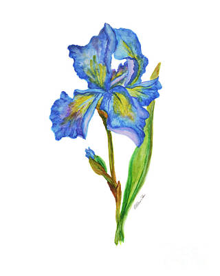 Painting - Iris Flower  by Olga Hamilton