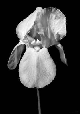 Photograph - Iris Flower Portrait Black And White by Jennie Marie Schell