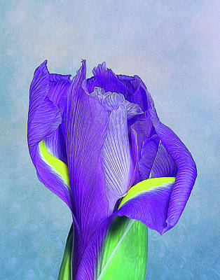 Iris Flower Art Print by Tom Mc Nemar