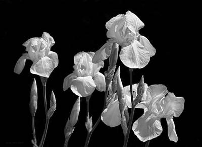 Photograph - Iris Flowers In The Garden Black And White by Jennie Marie Schell
