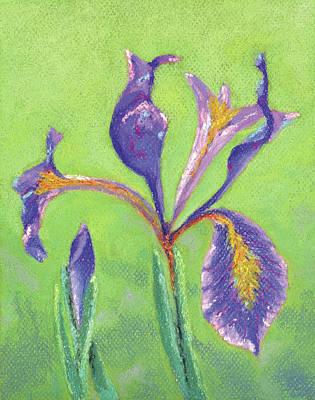 Pastel - Iris For Iris by Anne Katzeff
