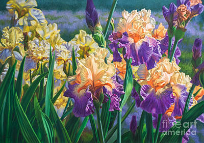 Bearded Iris Painting - Iris Garden 1 by Fiona Craig