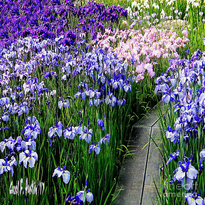 Photograph - Iris Flower Garden Wall Art by Carol F Austin