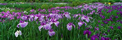 Garden Flowers Photograph - Iris Garden Nara Japan by Panoramic Images