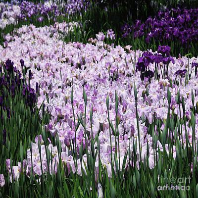 Photograph - Iris Purple Nature Garden Flower Wall Art by Carol F Austin