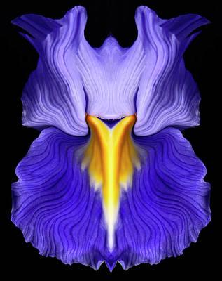 Iris Art Print by Gary Zuercher