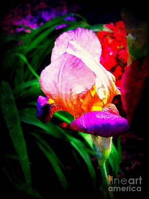 Iris Glow Art Print by Janine Riley