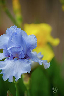 Photograph - Iris In Art by Pamela Williams
